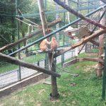 zoo oliwa